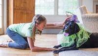 Собака в доме не только для игр и развлечений